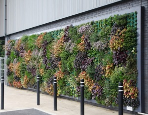 A Living Wall at Waitrose in Bracknell